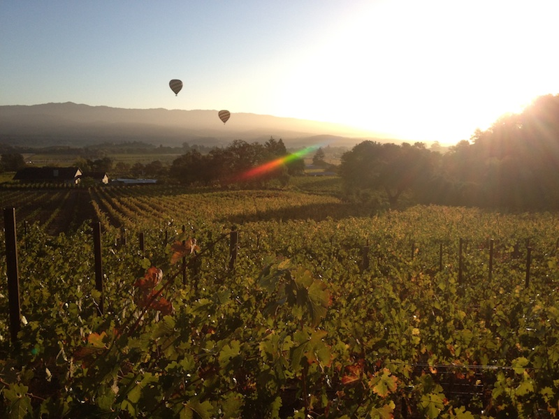a beautiful shot from harvest of my favorite vineyard block